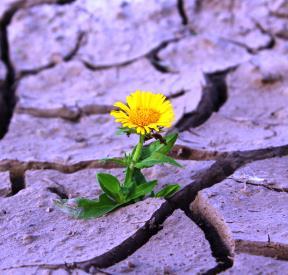 Inicio de ciclo de vida: flor en desarrollo